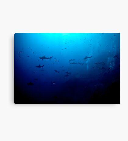 Blacktip & Whitetip Reef Sharks Canvas Print