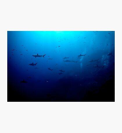 Blacktip & Whitetip Reef Sharks Photographic Print