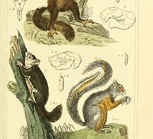 The Animal Kingdom by Georges Cuvier, PA Latreille, and Henry McMurtrie 1834 601 - Mammalia Mammals by wetdryvac