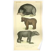 The Animal Kingdom by Georges Cuvier, PA Latreille, and Henry McMurtrie 1834 585 - Mammalia Mammals Poster