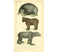 The Animal Kingdom by Georges Cuvier, PA Latreille, and Henry McMurtrie 1834 585 - Mammalia Mammals Photographic Print