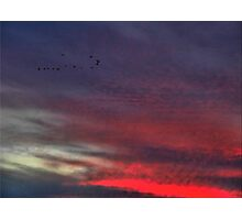 Flying Home on Ripples of Red Photographic Print