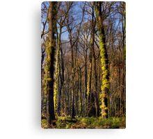 Regeneration After Fire Canvas Print