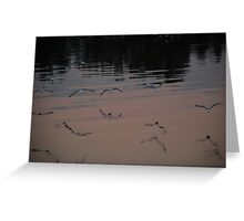 Seagulls over Manning Greeting Card