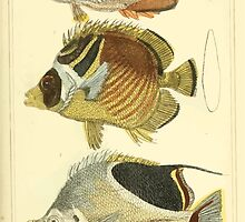 The Animal Kingdom by Georges Cuvier, PA Latreille, and Henry McMurtrie 1834  108 - Pisces Fish by wetdryvac