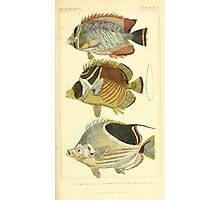 The Animal Kingdom by Georges Cuvier, PA Latreille, and Henry McMurtrie 1834  108 - Pisces Fish Photographic Print