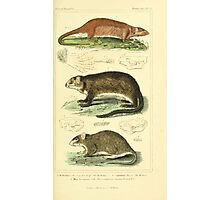 The Animal Kingdom by Georges Cuvier, PA Latreille, and Henry McMurtrie 1834 601 - Mammalia Mammals Photographic Print
