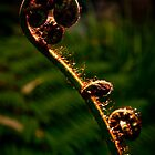 Backlit Fern Frond by Kana Photography