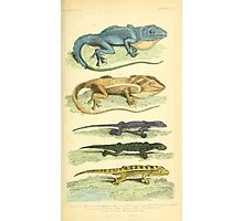 The Animal Kingdom by Georges Cuvier, PA Latreille, and Henry McMurtrie 1834 601 - Reptilia Reptiles Photographic Print
