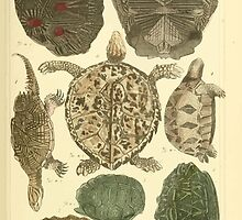 The Animal Kingdom by Georges Cuvier, PA Latreille, and Henry McMurtrie 1834  005 - Reptilia Reptiles by wetdryvac