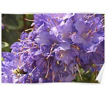 Purples Poster