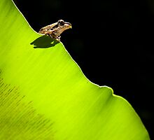 Frog on a Leaf by Kana Photography