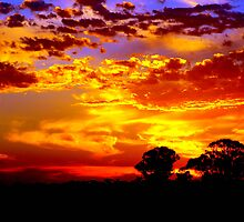 Golden sunset over the golden plains by Clive