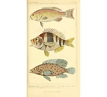 The Animal Kingdom by Georges Cuvier, PA Latreille, and Henry McMurtrie 1834 209 - Pisces Fish Photographic Print