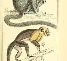 The Animal Kingdom by Georges Cuvier, PA Latreille, and Henry McMurtrie 1834 574 - Mammalia Mammals by wetdryvac
