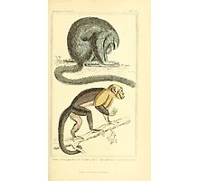 The Animal Kingdom by Georges Cuvier, PA Latreille, and Henry McMurtrie 1834 574 - Mammalia Mammals Photographic Print