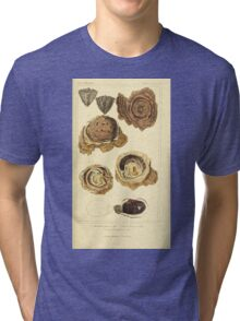 The Animal Kingdom by Georges Cuvier, PA Latreille, and Henry McMurtrie 1834  265 - Mollusca Mollusks Tri-blend T-Shirt