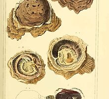 The Animal Kingdom by Georges Cuvier, PA Latreille, and Henry McMurtrie 1834  265 - Mollusca Mollusks by wetdryvac