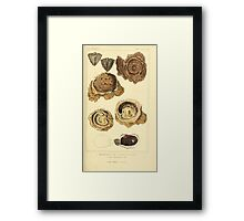 The Animal Kingdom by Georges Cuvier, PA Latreille, and Henry McMurtrie 1834  265 - Mollusca Mollusks Framed Print