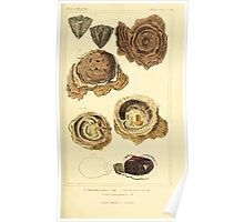 The Animal Kingdom by Georges Cuvier, PA Latreille, and Henry McMurtrie 1834  265 - Mollusca Mollusks Poster