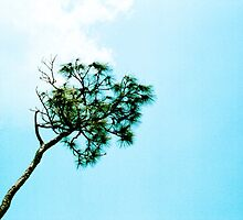 Pine in the Sky by njordphoto