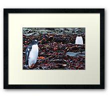 Penguin Friendship Framed Print