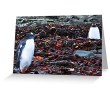 Penguin Friendship Greeting Card