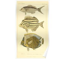 The Animal Kingdom by Georges Cuvier, PA Latreille, and Henry McMurtrie 1834 209 - Pisces Fish Poster