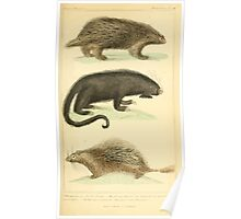 The Animal Kingdom by Georges Cuvier, PA Latreille, and Henry McMurtrie 1834 608 - Mammalia Mammals Poster