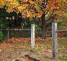 Autumn in Bright by Darren Stones