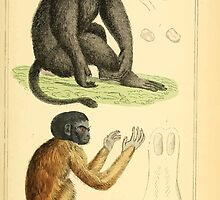 The Animal Kingdom by Georges Cuvier, PA Latreille, and Henry McMurtrie 1834 572 - Mammalia Mammals by wetdryvac