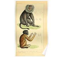 The Animal Kingdom by Georges Cuvier, PA Latreille, and Henry McMurtrie 1834 572 - Mammalia Mammals Poster