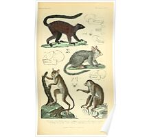 The Animal Kingdom by Georges Cuvier, PA Latreille, and Henry McMurtrie 1834 580 - Mammalia Mammals Poster