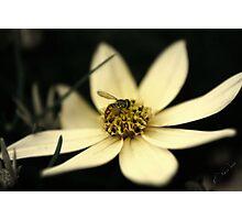 Honey Do Photographic Print