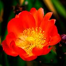 The Cactus Flower by Phil Thomson IPA