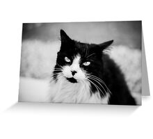 Life through a cats eye Greeting Card