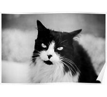 Life through a cats eye Poster