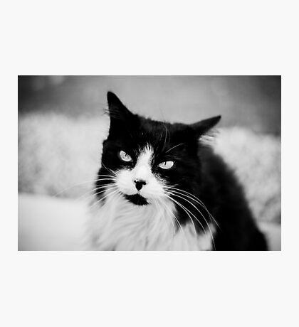 Life through a cats eye Photographic Print