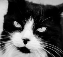 Life through a cats eye Sticker