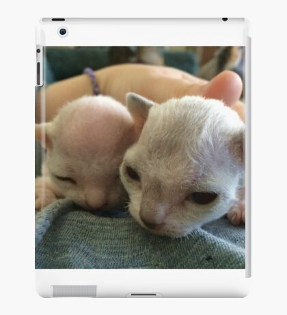 Tiny Sphynx and Rex Kittens iPad Case/Skin