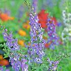 Summer Garden by BrightWorld