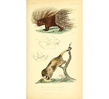 The Animal Kingdom by Georges Cuvier, PA Latreille, and Henry McMurtrie 1834 609 - Mammalia Mammals Photographic Print
