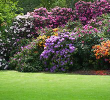 Rhododendrons in Dulwich Park London. by DonDavisUK