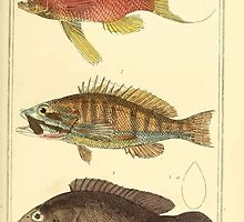 The Animal Kingdom by Georges Cuvier, PA Latreille, and Henry McMurtrie 1834  049 - Pisces Fish by wetdryvac