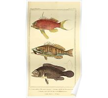 The Animal Kingdom by Georges Cuvier, PA Latreille, and Henry McMurtrie 1834  049 - Pisces Fish Poster