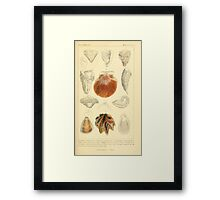 The Animal Kingdom by Georges Cuvier, PA Latreille, and Henry McMurtrie 1834 601 - Mollusca, Mollusks Framed Print