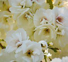 Spring by Maria Tannas