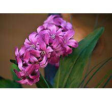 Real Cute Pink Flower Photographic Print