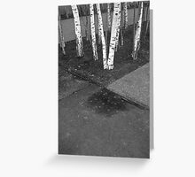 silver birch Greeting Card