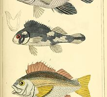 The Animal Kingdom by Georges Cuvier, PA Latreille, and Henry McMurtrie 1834  095 - Pisces Fish by wetdryvac